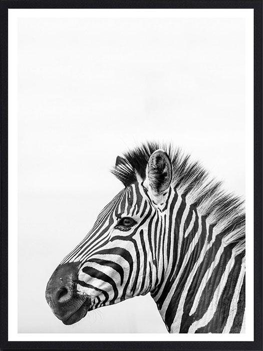 Animal8NoirPAD