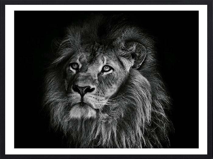 lion-portrait-3