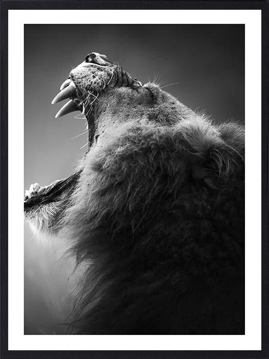 lion-rugissant