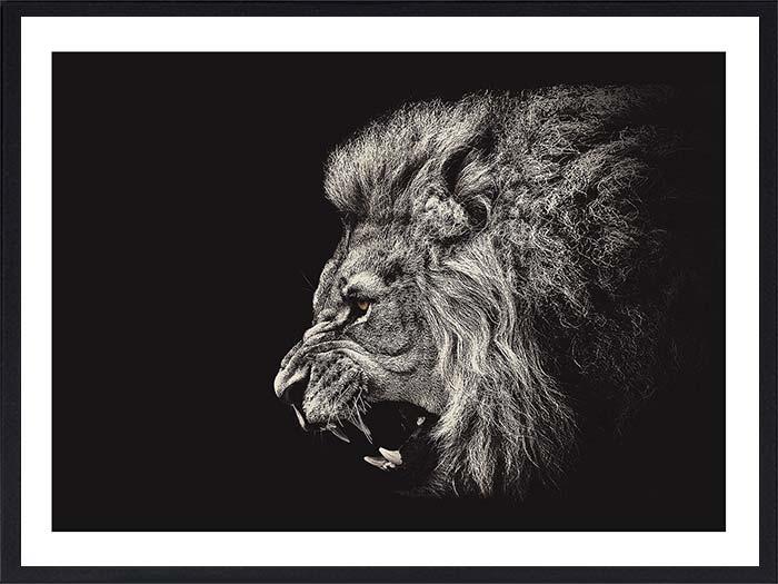 lion-rugissant1