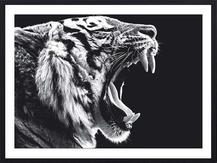 tigre-rugissant