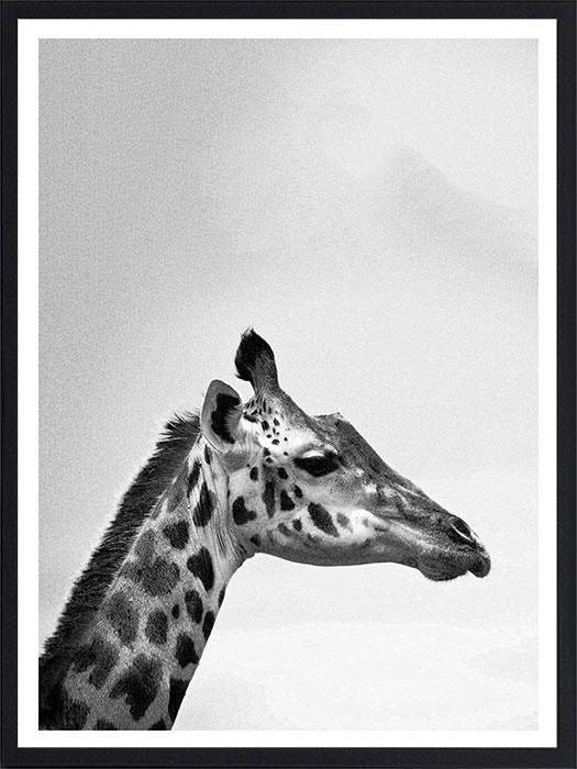Animal19NoirPAD