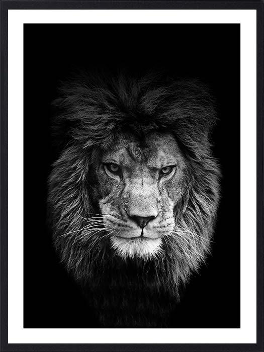 lion-portrait1